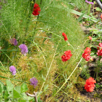 Chives and Geum