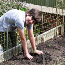 Then replant in the raised beds