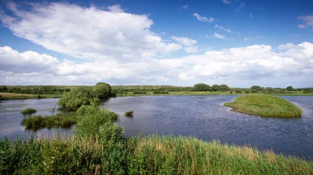 Photo from the RSPB Old Moor Website