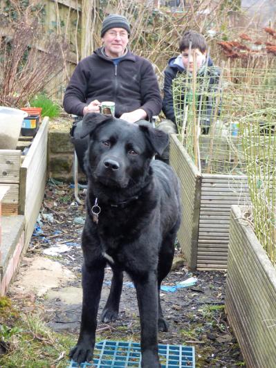 Our gardening companion, Buddy