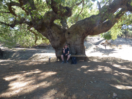 under the shade of a big oak tree