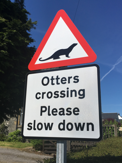 62 otters have died on roads in Mull in 5 years
