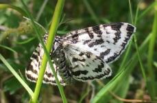 Moth - ID unknown?