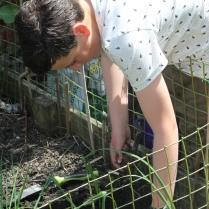 planting on